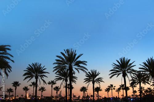 Sunset on palm tree boulevard Wallpaper Mural