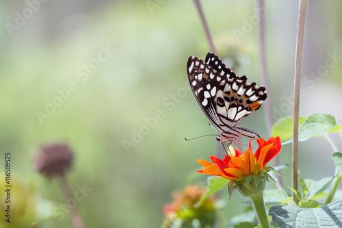 Fotografie, Obraz  Beautiful butterfly