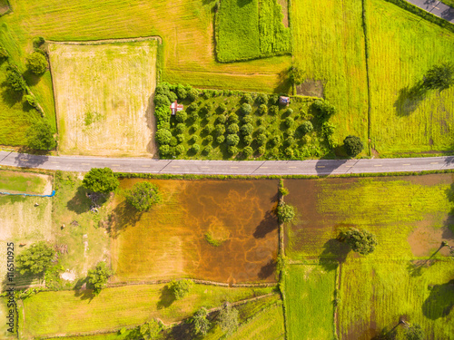 Garden Poster Rice fields Aerial view of rice fields