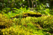 Abstract, Colorful Composition With Moss Flowers In Deep Forest