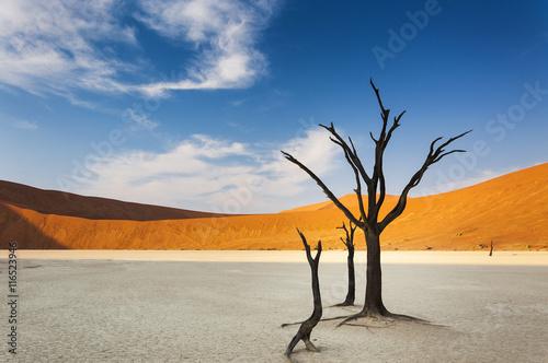 Fotografie, Obraz  Dead trees and red dunes in the Dead Vlei, Sossusvlei, Namibia, concept for trav