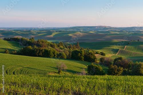 Fotografie, Obraz  Farmland