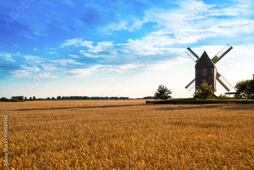 Windmühle im Weizenfeld - 116564168
