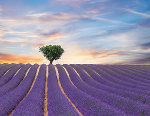 Obraz na Plexi Prowansalski Beautiful landscape of blooming lavender field