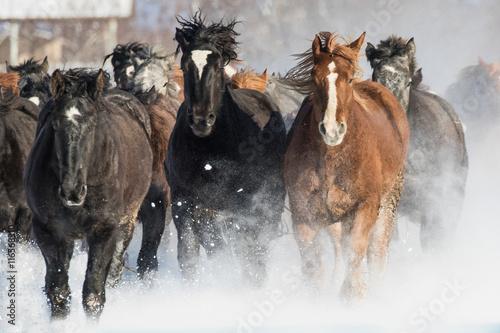 Fototapeta 走る馬 obraz