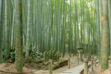 Bamboo garden and walkway in Japan