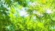 Video 3840x2160 - Bamboo leaves in sharp contrast against a bright sky, swaying softly in a light breeze.
