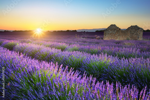 Poster Jaune de seuffre Lavender field and hut at sunset, Provence, France
