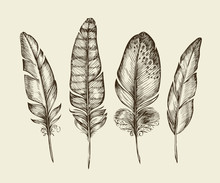 Hand Drawn Vintage Bird Feathers. Sketch Writing Feather. Vector Illustration