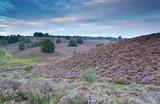wzgórza z kwitnącym wrzosem w lecie - 116594928