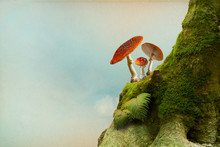 Background With Moss And Fly Agaric