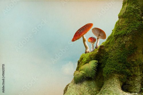 Background with moss and fly agaric Canvas Print