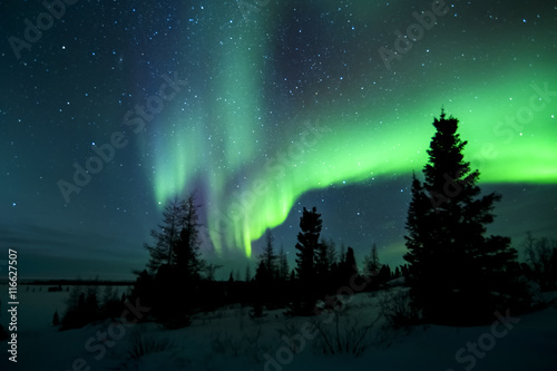 Canvas Prints Pole Aurora borealis, northern lights, wapusk national park, Manitoba, Canada.