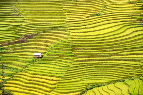 Photo sur Toile Les champs de riz beautiful landscape view of rice terraces and house at Sapa in n