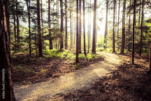 Foto op Aluminium Diepbruine Hiking path and sunset in beautiful woods