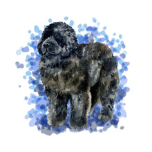 Watercolor Closeup Portrait Of Newfoundland Breed Dog Isolated On Blue Background. Canadian Large Longhair Working Guardian Dog. Hand Drawn Sweet Home Pet. Greeting Birthday Card Design. Clip Art
