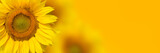 Yellow sunflower background