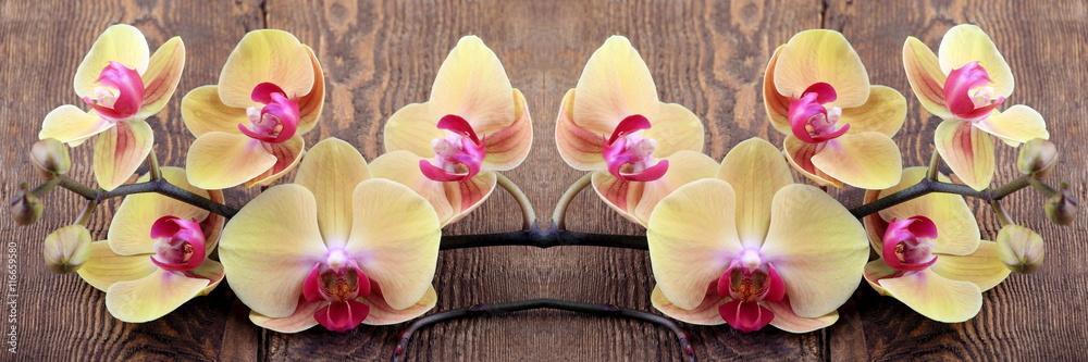 Fototapety, obrazy: Orchidea phalaenopsis
