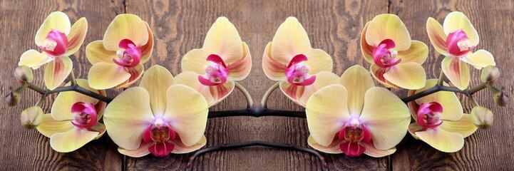 Fototapeta Egzotyczne Orchidea phalaenopsis