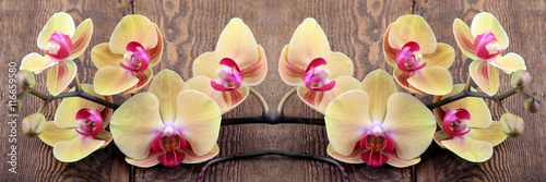 Poster Orchidee Orchidea phalaenopsis