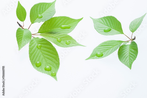 葉っぱと滴 Canvas