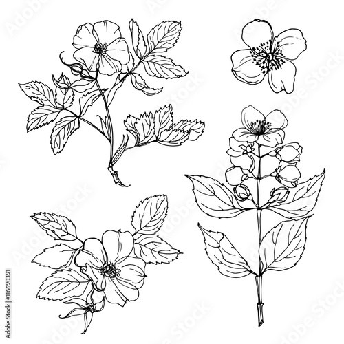 Set of flowers painted line on a white background Wallpaper Mural