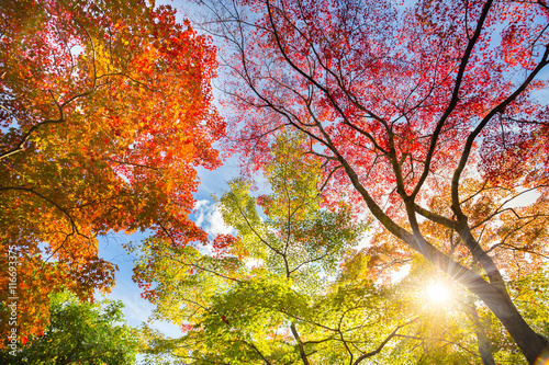 Photo Stands Autumn The warm autumn sun shining through colorful treetops, with beautiful bright blue sky.