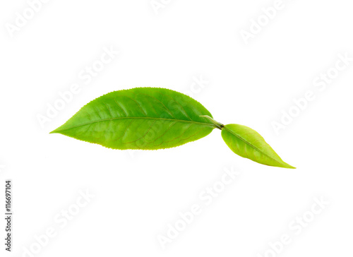 Fototapety, obrazy: Green tea leaf on white background
