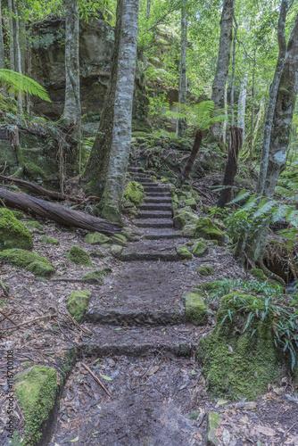 Valokuva  Walking track, Grand Canyon, Blue Mountains National Park, UNESCO World Heritage Site, New South Wales, Australia