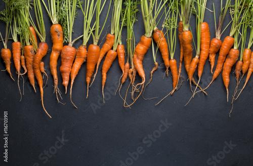 Świeża marchewka