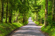 canvas print picture - Old Country Road in the Great Smoky Mountains National Park, USA.