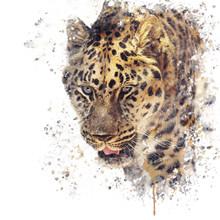 Portrait Of Leopard Watercolor
