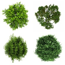Tree Isolated White Background Collage