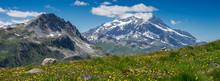 Prairie De Montagne En été