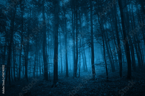 Poster Bossen Dark blue colored spooky forest tree landscape. Blue color filter effect used.