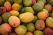 canvas print picture - pile of fresh mango fruits