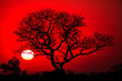 canvas print picture - African tree silhouette