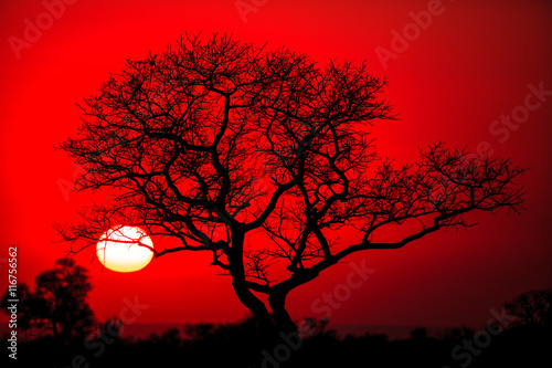 Garden Poster Red African tree silhouette