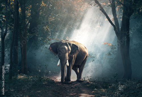 Deurstickers Olifant Elephants in the forest