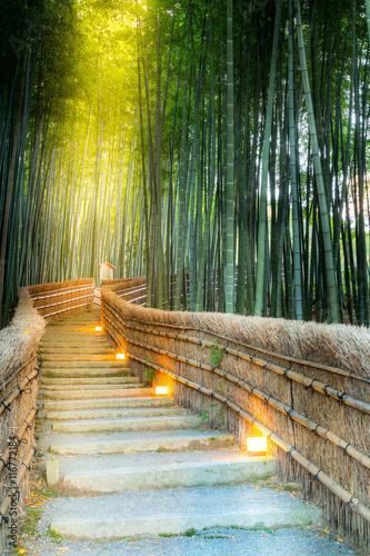 In de dag Bamboo Arashiyama Bamboo Forest