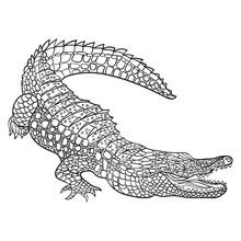 Vector Monochrome Hand Drawn Illustration Of Crocodile.