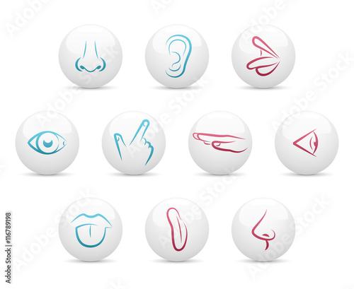 Foto  Five senses - buttons