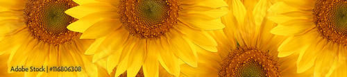 La pose en embrasure Tournesol sunflower summertime