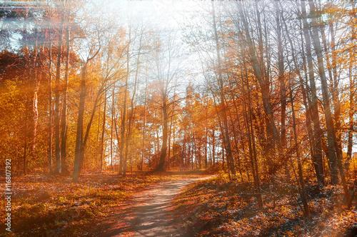 Poster Oranje eclat Forest sunny autumn landscape -row of autumn yellowed trees under autumn sunlight.