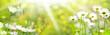 Leinwandbild Motiv Blumenwiese im Sommer  -  Panorama, Banner