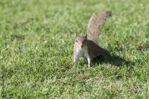 Squirrel Staring, Winter Park, Orlando, Florida Poster