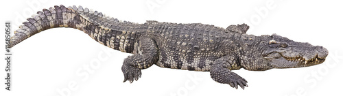 Photo sur Toile Crocodile crocodile big