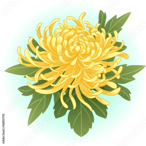 Canvas Print yellow chrysanthemum flower illustration vector