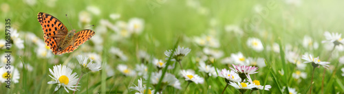 Foto op Canvas Pistache Blumen 692