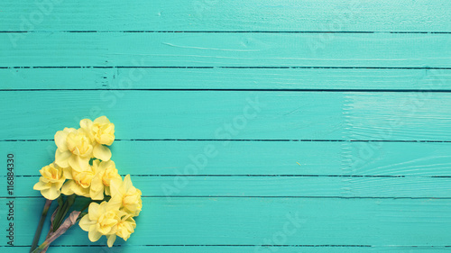 Yellow narcissus or daffodil flowers on turquoise wooden backgro